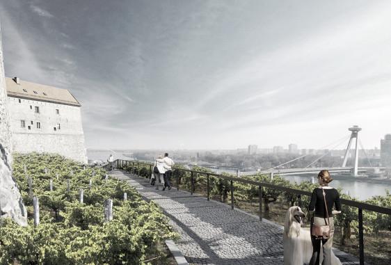Bratislava wine-yard